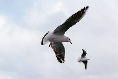 Close-up view of two seagulls flying in the sky. Banco de Imagens