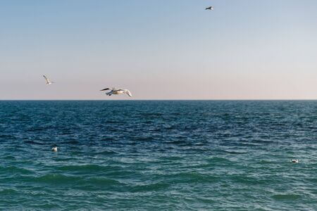 Seagulls flying over the calm clear sea. Banco de Imagens