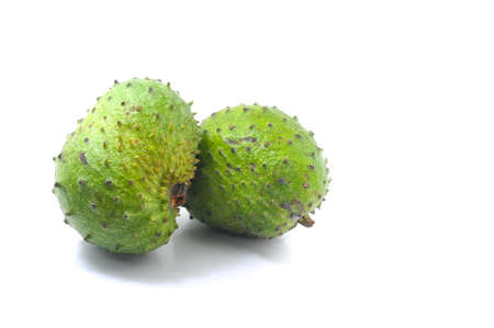 annona: Soursop Prickly Custard Apple. Annona muricata L. Treatment of cancer.