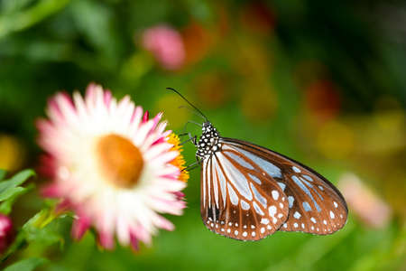Closed up Butterfly on flower during hot day Stock Photo
