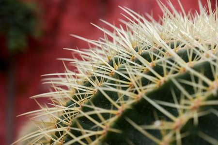 varies cactus plant in the farm cameron highland. Banco de Imagens