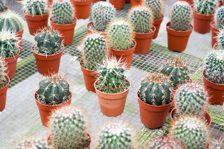 varies cactus plant in the farm cameron highland. Banco de Imagens