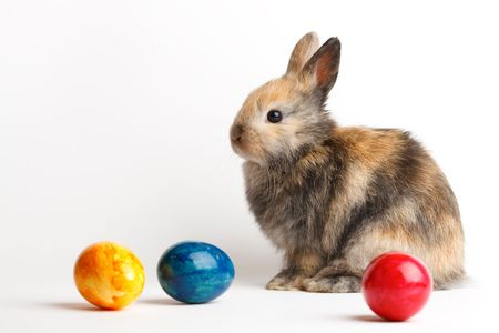 A rabbit with easter eggs isolated on white background Stock Photo - 6365512