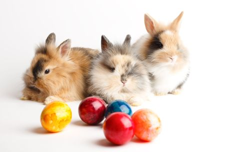 Three young rabbits with easter eggs isolated on white background Stock Photo - 6365519