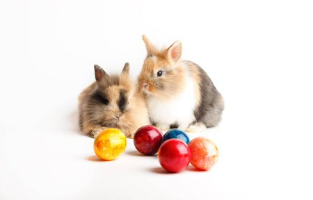 Two young rabbits with easter eggs isolated on white background Stock Photo - 6365557