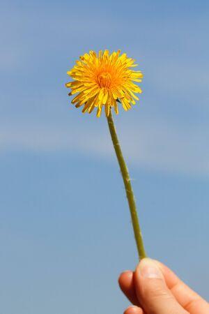 El diente de Le�n en frente del cielo azul  Foto de archivo - 6929550