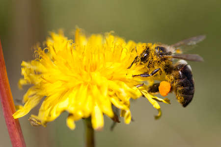 Bee perched on a flower collecting pollen Banco de Imagens