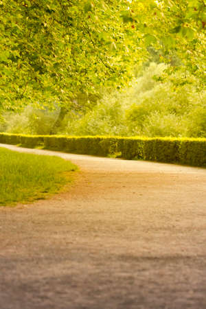treeline: Wonderful summer alley  The warm summer sun shines through the trees of a beautiful avenue  Stock Photo