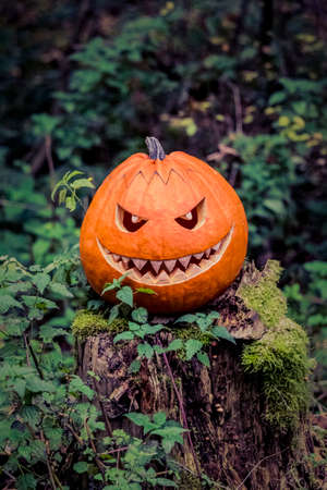 selfmade: Halloween pumpkin with fiendish smile on scary trunk in forest. The orange selfmade halloween symbol is sitting between green autumn nature. Mystery scene on Ocober 31st.