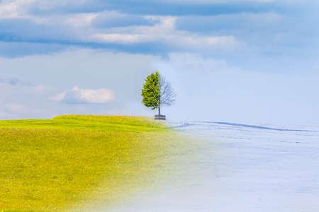El cambio climático a partir del verano al horario de invierno durante el año. El tiempo naturaleza visual con un solo árbol en una colina. Un prado caliente tiene una transición a la nieve fría. Juicy hojas tienen una transición Icy ramas Foto de archivo - 52781988