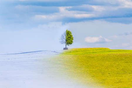 Der Klimawandel von Winter- auf Sommerzeit über das Jahr. Natur Wetter visuelle mit einem einzigen Baum auf einem Hügel. Kalter Schnee hat einen Übergang zu einer heißen Wiese. Eisige Zweige haben einen Übergang Blätter saftig