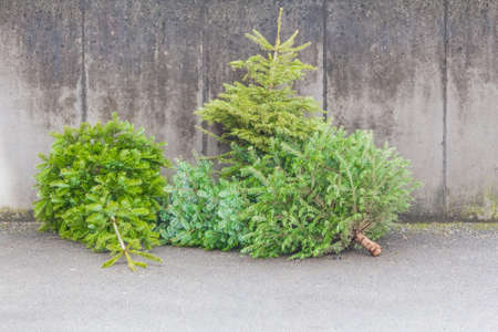 discarded: Traditional green christmas trees firs on street at xmas season. The x-mas trees waiting for buyers on sale before christmas holiday or after ending x-mas time for disposal recycling reasons.
