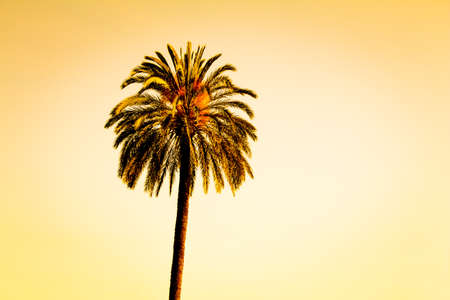 Vintage single tropical luxury paradise beach palm summer sky. Huge lonely palm at foreign holiday coast. Beautiful symbol of tourism vacation trip travelling to holiday dream island. Copypace. 写真素材