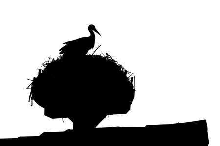 Wild stork sitting on rooftop nest with majestic throne view. Silhouette of rural animal. The bird on the roof is also metaphor and symbol for birth of newborn babies. Endangered wildlife species.