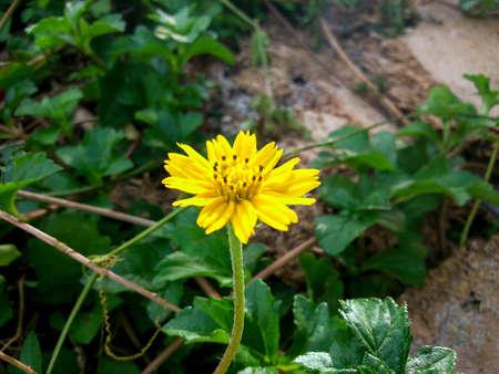 tiny: tiny yellow flower
