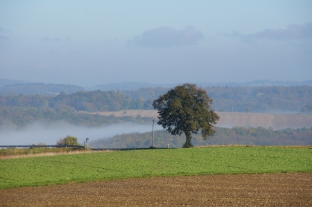 feld: Landscape with tree and morning fog Stock Photo