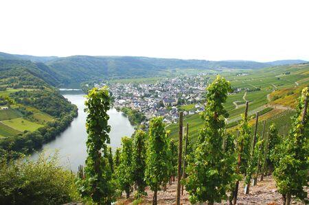 winegrowing: Kroev on the Moselle in September