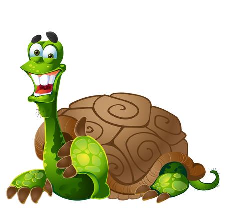children turtle: turtle on white background