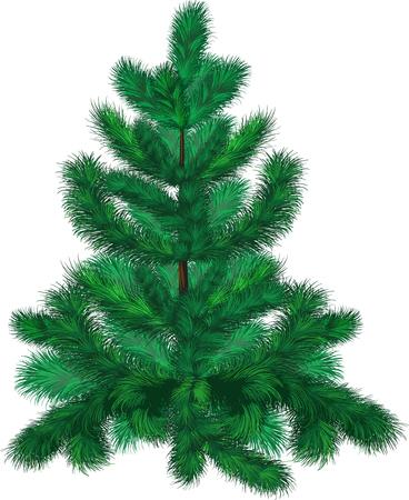 green fir-tree Stock Vector - 6165946