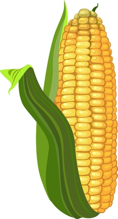 maize: ripe corn