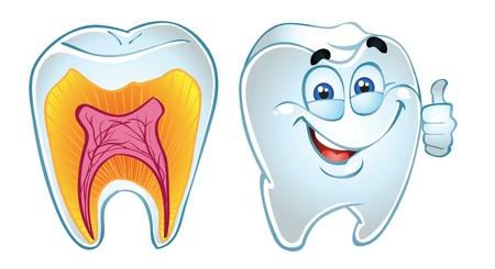 dientes caricatura: diente sonrisa y los dientes de la sección