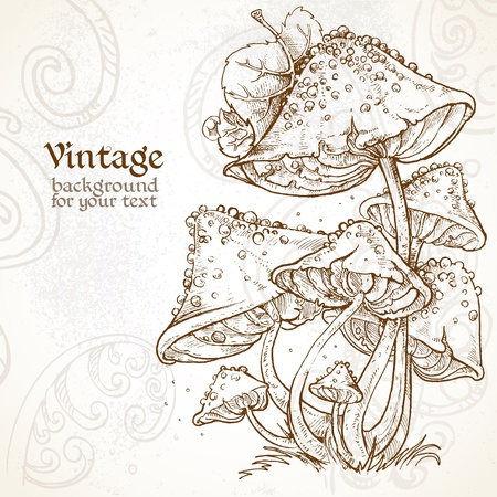 fairy toadstool: Poisonous mushrooms fabulous vintage background for your text  Illustration