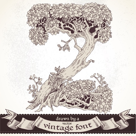 magic forest hand drawn by a vintage font - Z