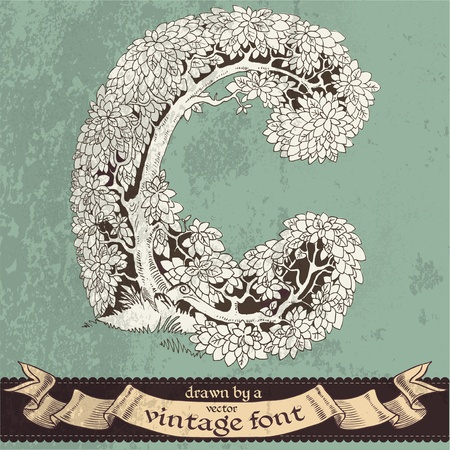 extraordinary: magic grunge forest hand drawn by a vintage font - C