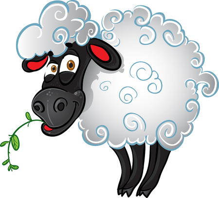 flock of sheep: Sheep with blade of grass