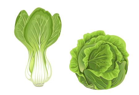 cabbage: Hoofd van de groene kool en sla Stock Illustratie