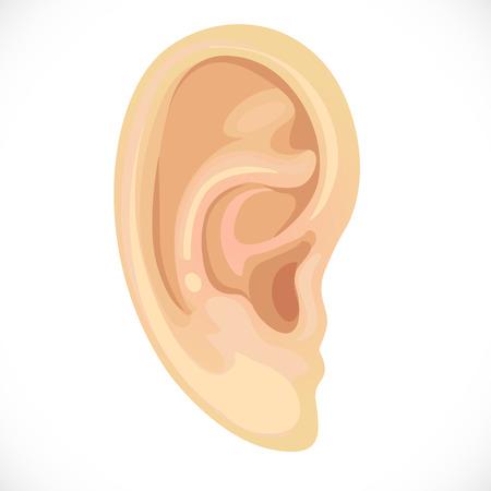 realistisch menselijk oor Stock Illustratie