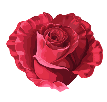 Rose in the shape of heart on Valentine`s day Vector