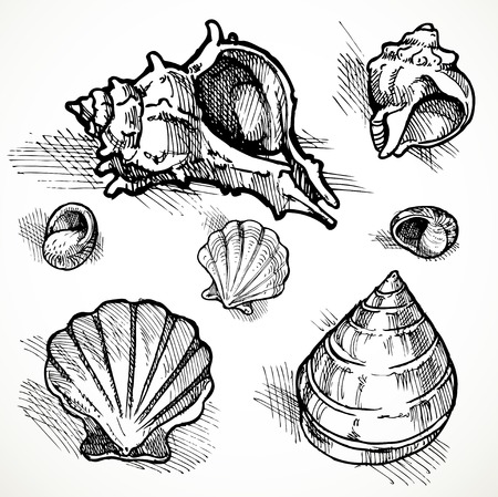 scallops: Set of sketches of different shapes shell