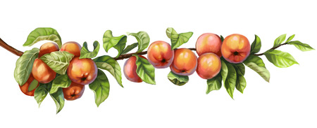 apple border: Ripe red apples on a branch on a white background