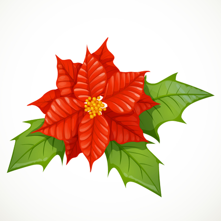 Holly flower isolated on white background Vector