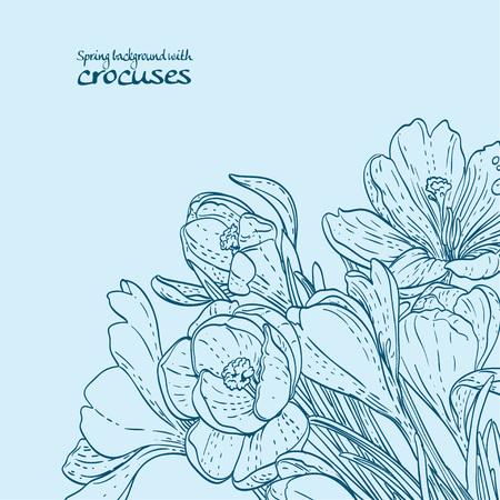 Background of spring crocuses outline