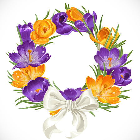 saffron: Wreath of purple and yellow spring crocus with beautiful white ribbon bow Illustration