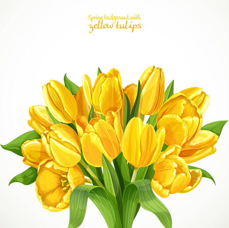 Spring background with a big lush bouquet of yellow tulips on white background Vector