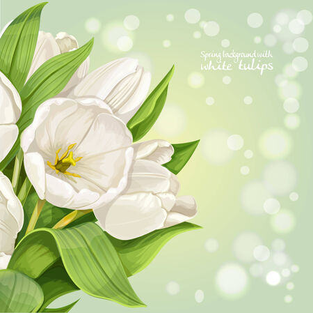 Vertical spring background with white tulips Vector