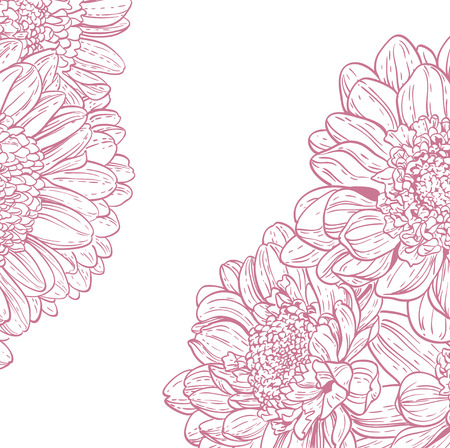 line drawings: Line drawings pink chrysanthemum on white background