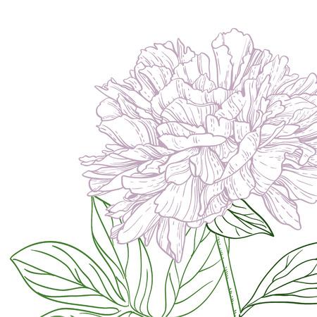 streckbilder: Pioner rosa och gröna linjen konst Illustration