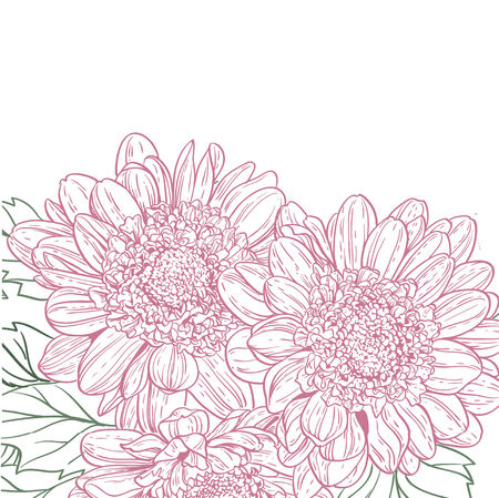 Line drawings chrysanthemum background Vector