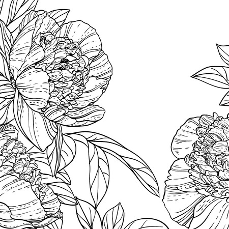 Peonies black line art background Vector