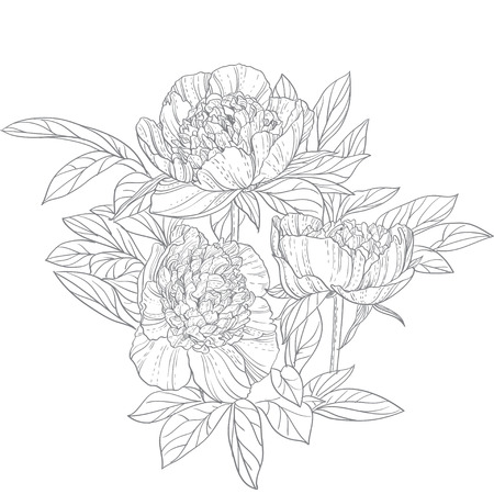 Peonies line art isolated on white background Vector