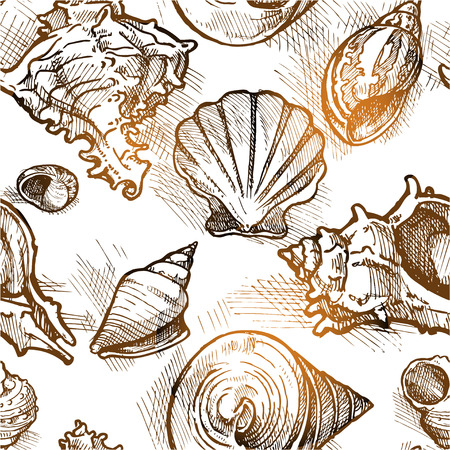 shell pattern: Seamless pattern from of different shapes shell  sketches