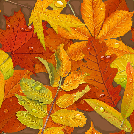 chokeberry: Seamless pattern from autumn leaves on the ground