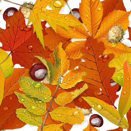 aronia: Seamless pattern from autumn leaves on the white background