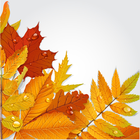 chokeberry: Yellow and green autumn leaves background 1