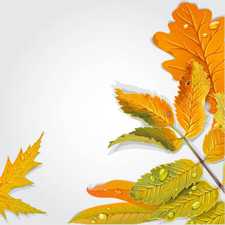 chokeberry: Yellow and green autumn leaves background