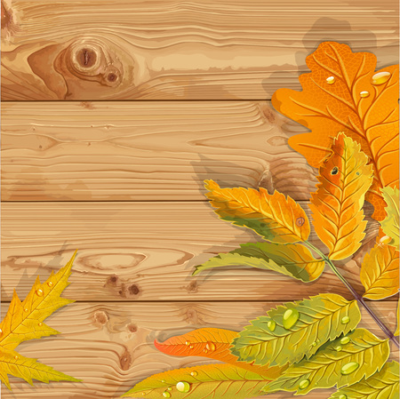 aronia: Yellow and green autumn leaves wooden background Illustration